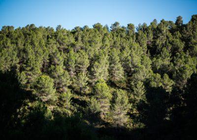 Bosque en la Ombria del castillo