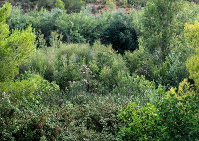 Bosque de ribera en el Franc de Sumacàrcer